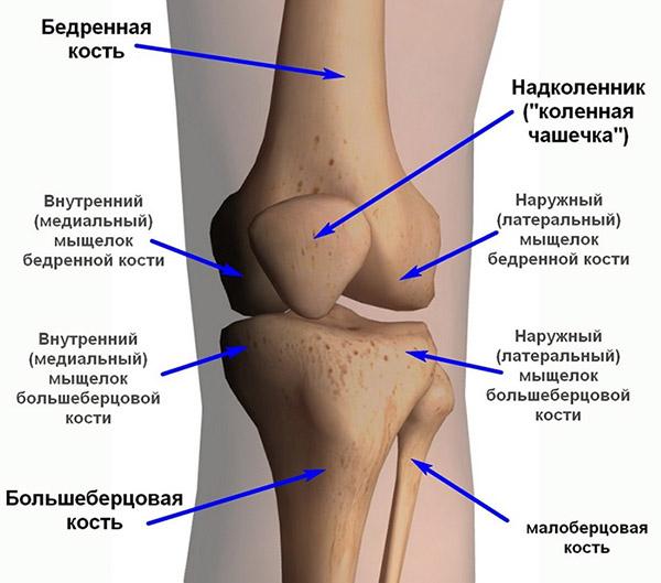 Тест на коленные суставы суставной синдром псориатического артрита