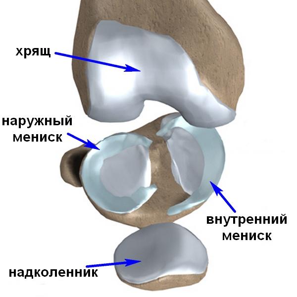 Биовинты при артроскопической операции на коленном суставе стоимость протеза плечевого сустава