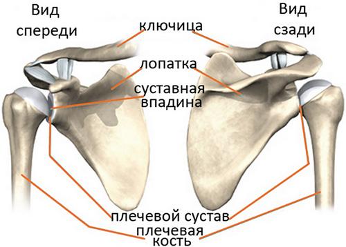Виды повреждения плечевого сустава банкарт хроническое воспаление тазобедренного сустава